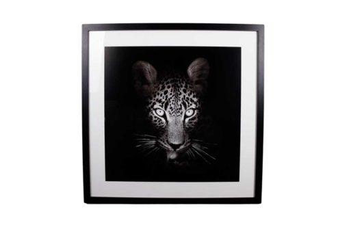 Tavla Leopard
